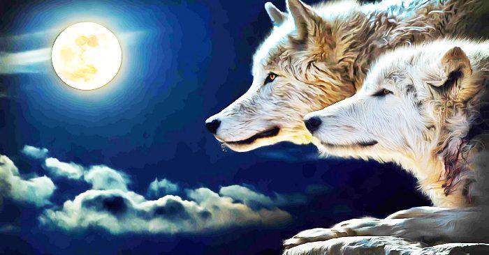 Cứu vật vật trả ơn: Gặp phải đàn sói đói khát, những chuyện tiếp sau đó thật khó ai ngờ