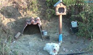 Chú chó trung thành túc trực bên mộ người chủ quá cố suốt 18 tháng ròng