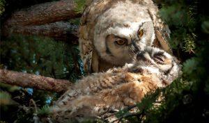 Những bức ảnh ấn tượng về cuộc sống của động vật hoang dã