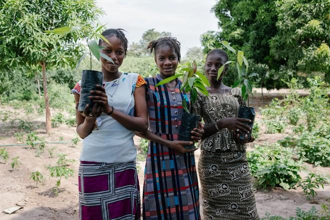 Góp sức cứu rừng Amazon chỉ bằng cách gõ phím - Ecosia (Ảnh 6)