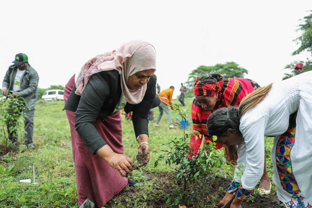 Trồng rừng chính là cách tự nhiên, đơn giản, rẻ tiền nhất và ai cũng có thể làm được để chống biến đổi khí hậu.