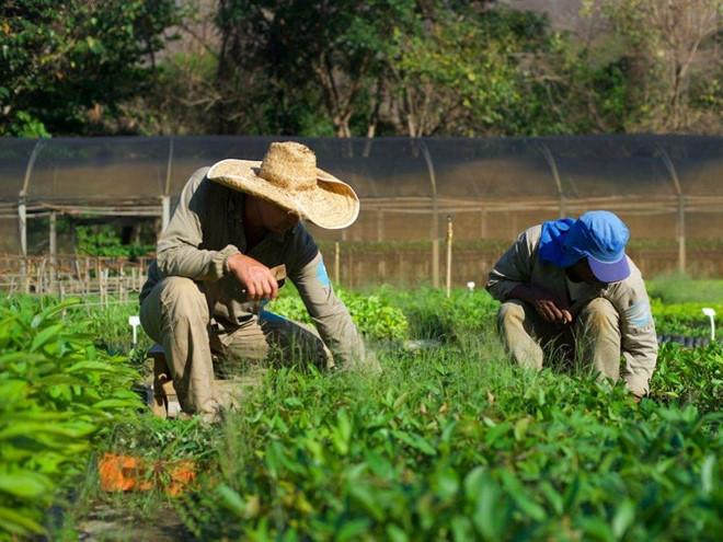 Góp sức cứu rừng Amazon chỉ bằng cách gõ phím - Ecosia (Ảnh 5)