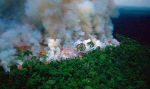 Sao Titanic tài trợ 5 triệu đô la hỗ trợ chữa cháy rừng Amazon
