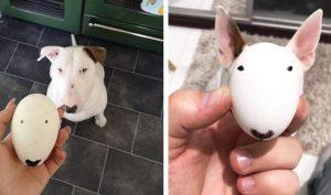 Hài hước chú chó có khuôn mặt hình quả trứng