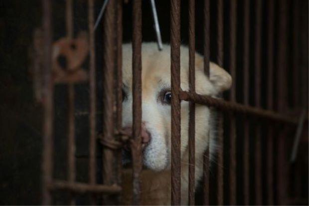 Việc ăn thịt chó mèo sẽ bị cấm hoàn toàn ở Đài Loan. Người vi phạm sẽ phải nộp phạt. (Ảnh qua Zing)
