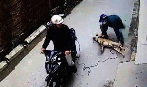 Thanh Hóa: Triệt phá đường dây trộm hơn 100 tấn chó do 3 thanh niên cầm đầu