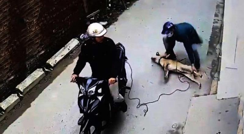 Triệt phá đường dây trộm hơn 100 tấn chó do 3 thanh niên ở Thanh Hóa cầm đầu. (Ảnh qua tuoitre)