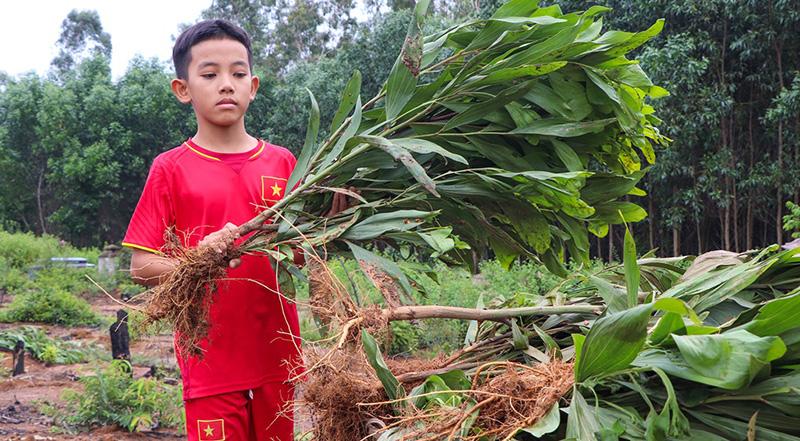 Nguyễn Đức Quang với khuôn mặt buồn bã nói sáng nay, em được nghỉ học nên cùng mẹ đến nhặt nhạnh từng gốc cây để mang đi đốt.
