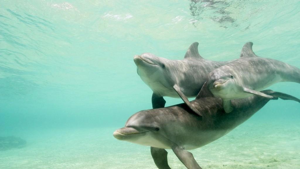 đàn cá heo đột nhiên xuất hiện vây xung quanh hai mẹ con cá voi lưng gù với ý bảo vệ mẹ con cá voi thoát khỏi tình huống nguy hiểm.