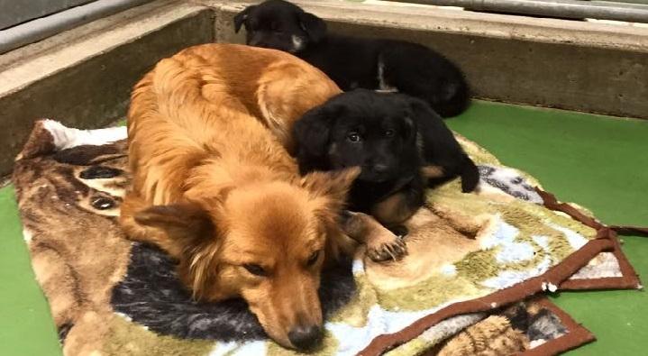 Cảm động chó mẹ trốn thoát để an ủi 2 chú cún con thiếu mẹ
