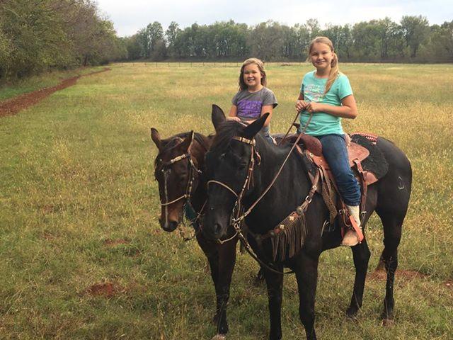 Bà mẹ kinh ngạc phát hiện các cô con gái đang nhảy múa cùng chú ngựa
