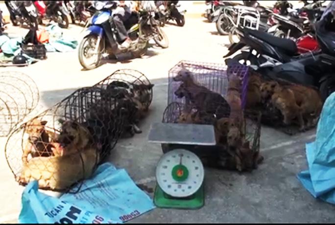 Đàn chó do băng nhóm này trộm cắp trong đêm 14 rạng ngày 15/9.