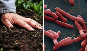 Thêm 4 người nhiễm 'vi khuẩn ăn thịt người' gây bệnh Whitmore