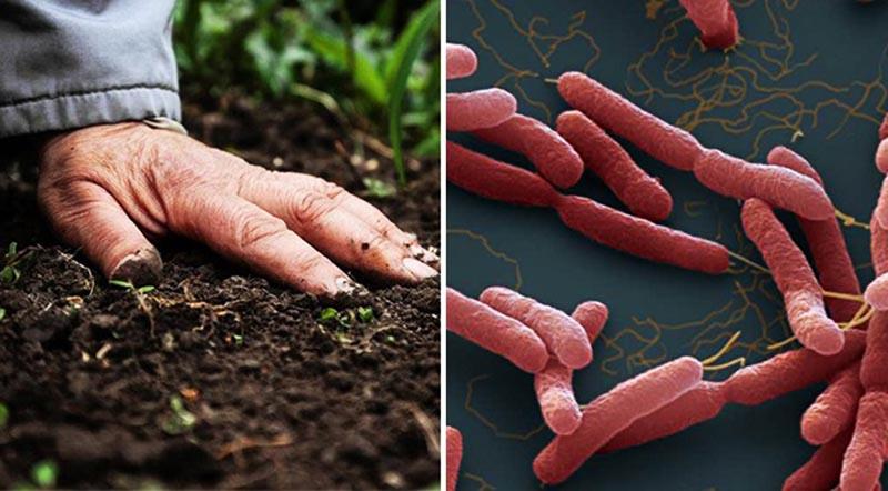 Thêm 4 người nhiễm 'vi khuẩn ăn thịt người' gây bệnh Whitmore. (Ảnh qua dkn)