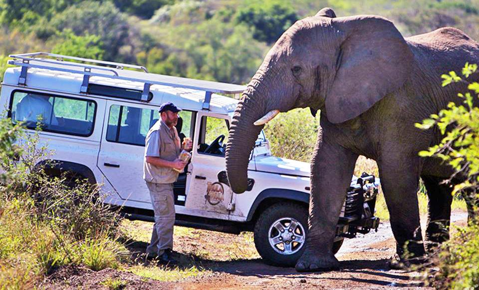 Cảm động: Đàn voi kéo nhau tới nhà ân nhân để đưa tang suốt 2 ngày