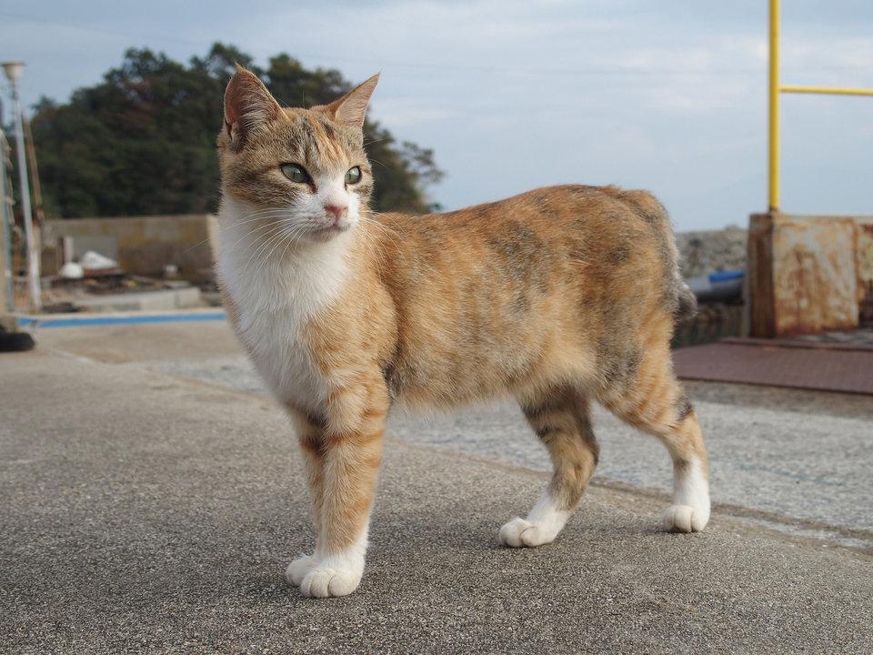 Một số con mèo trông khá là đường bệ.