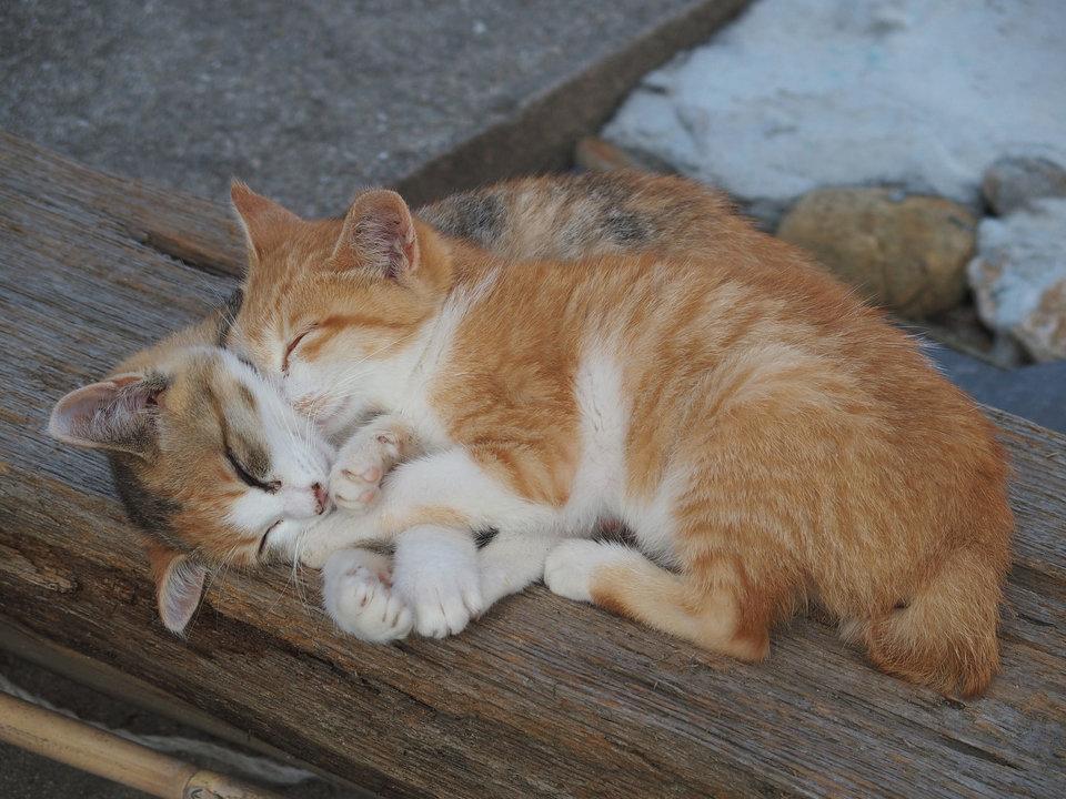 Hay rúc vào những con mèo khác.