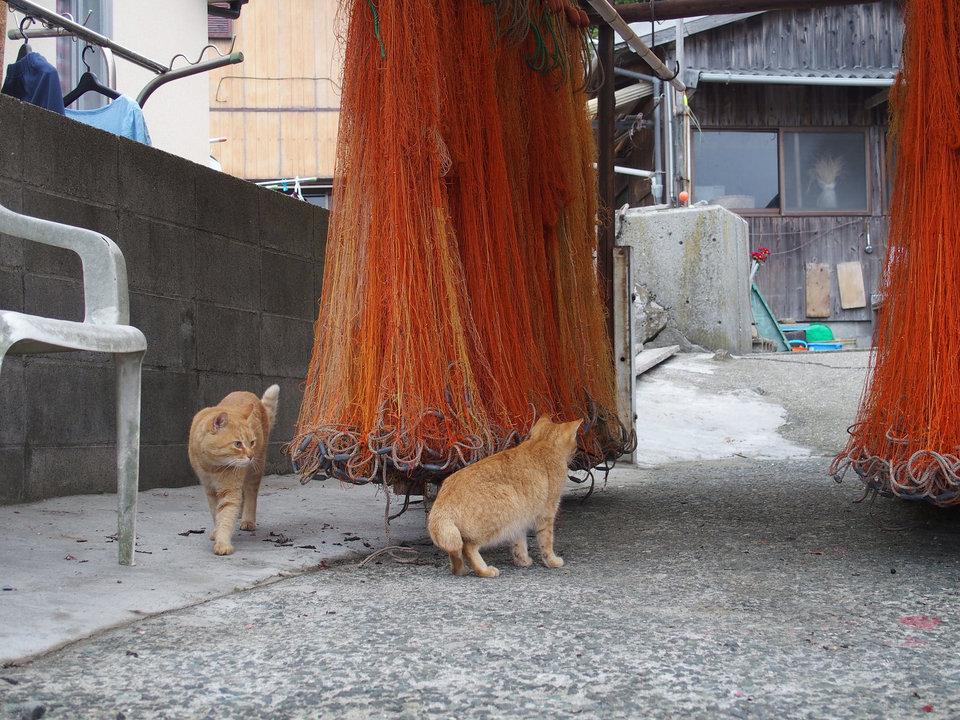 Aoshima là một làng chài, vì vậy lũ mèo thường hay kiểm tra lưới.