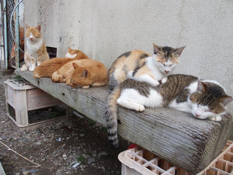 Thỉnh thoảng chúng ngủ trưa với bạn bè.