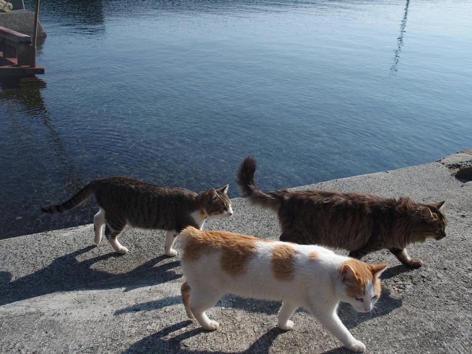 Khi chúng không ngủ trưa thì chúng sẽ đi lang thang khắp đảo.