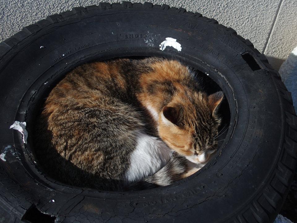 Hoặc thậm chí cuộn lên trong lốp xe.