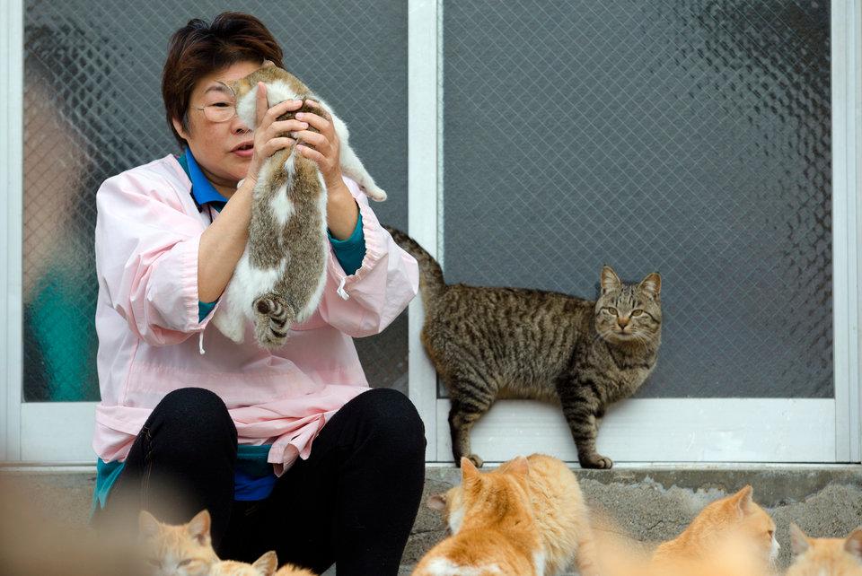 Đôi khi cư dân ở đảo Aoshima chơi với chúng.