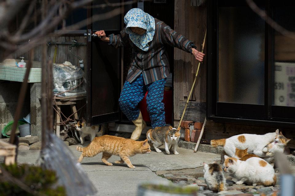 Nhưng đôi lúc họ muốn lũ mèo tránh đường.