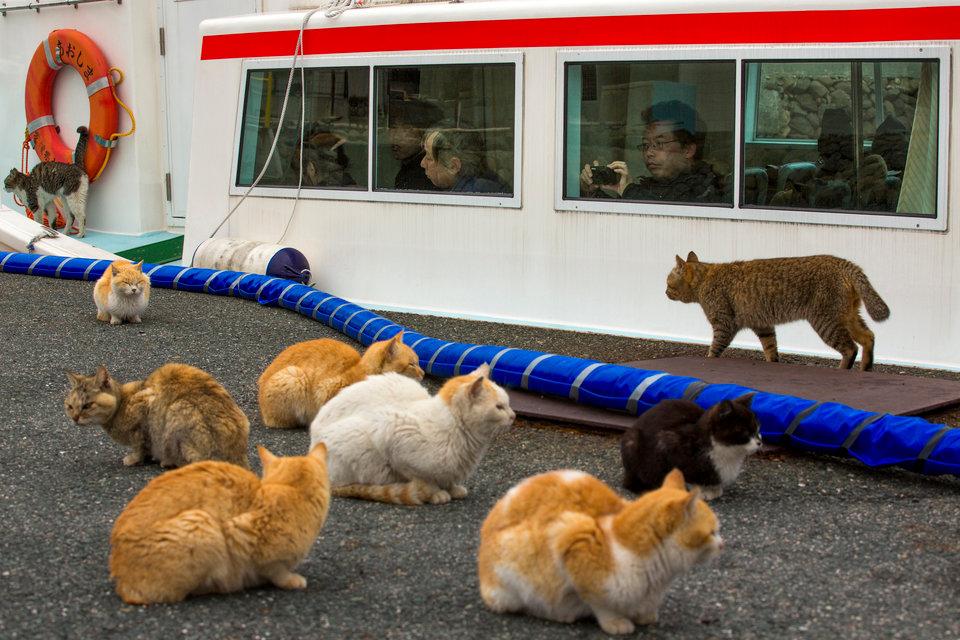 Khách du lịch cũng bắt đầu đến với hòn đảo để được chiêm ngưỡng lũ mèo.