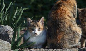 Đảo Mèo tại Nhật Bản, nơi loài mèo đông hơn gấp 8 lần cứ dân trong làng