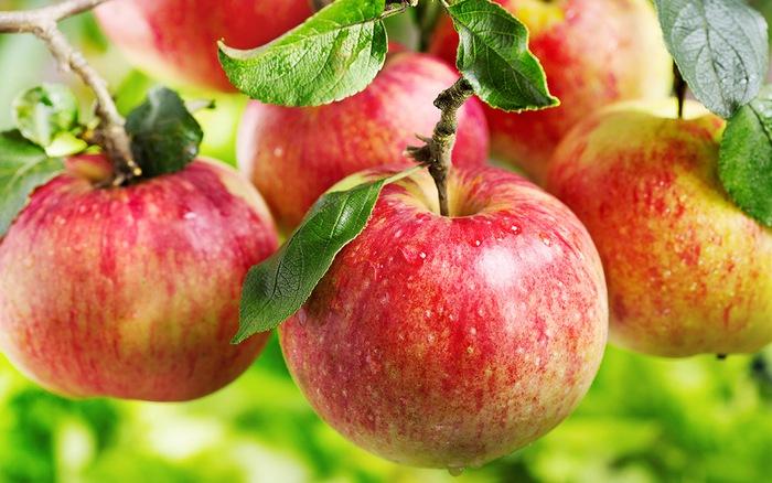 Cả một hộp táo như vậy mà bà lão cuối cùng không ăn được một quả nào tươi ngon.