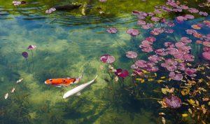 Trầm trồ trước hồ đẹp như tranh sơn dầu ở Nhật Bản