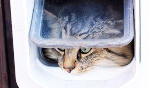 Chú mèo phớt lờ lối đi chủ mất công làm cho, vươn tay ra mở nắm cửa đi như… người