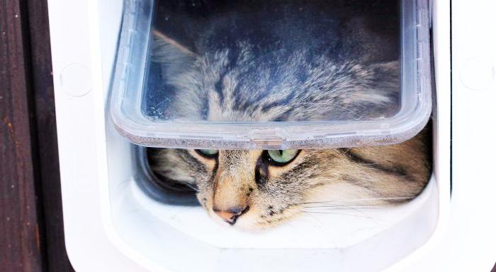 Chú mèo phớt lờ lối đi chủ mất công làm cho, vươn tay ra mở nắm cửa đi như... người
