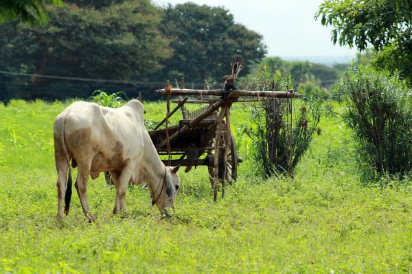 Công ty xi măng Trung Quốc bắt đầu kiểm tra mẫu đất vào năm 2014 và mua hết hơn 240ha đất từ những người dân trong làng. (Ảnh qua Truly Times)