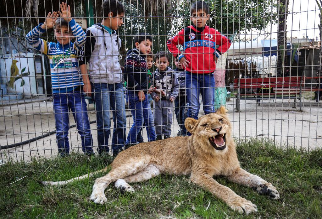 Chưa kể việc rút móng động vật ngay trước mặt trẻ em để chúng chơi đùa, sẽ làm gương xấu cho tất cả trẻ em.