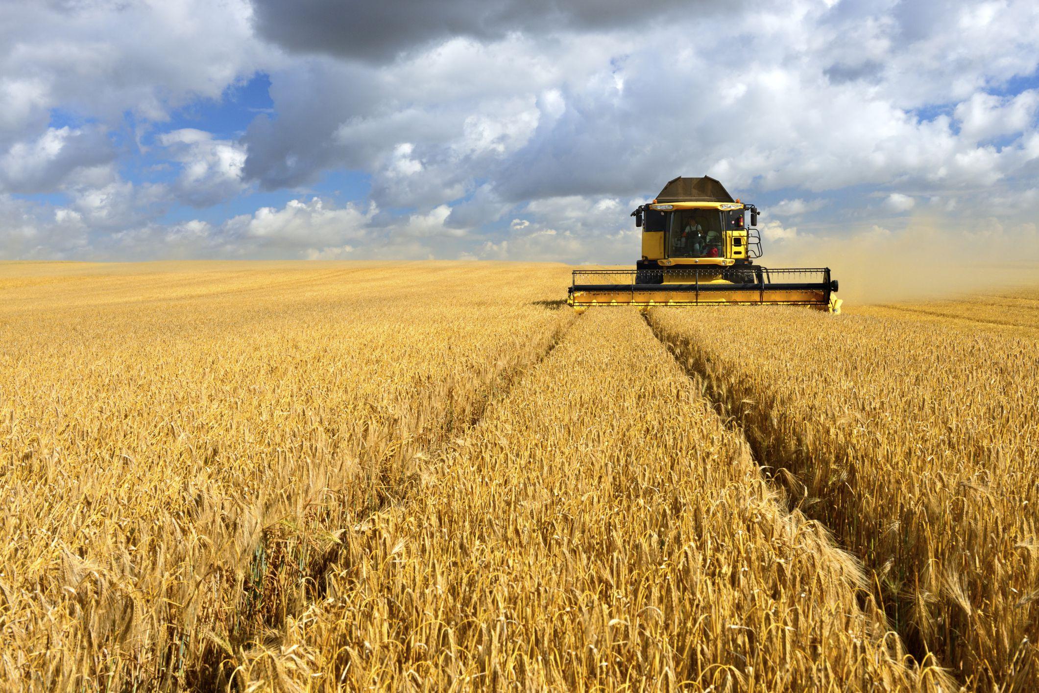 Những người nông dân phải làm việc cực nhọc dưới nắt gắt.