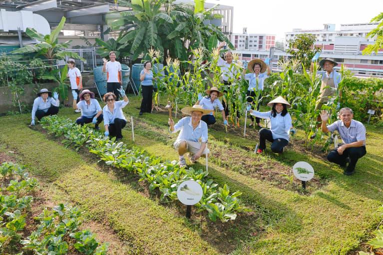 Bệnh viện có hẳn một khu vực trồng thực phẩm hữu cơ. (Ảnh qua MindBodyGreen)