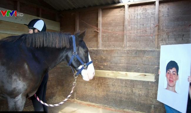 những con ngựa này có thể hiểu và ghi nhớ toàn bộ cảm xúc của những người mà trước đó nó đã nhìn thấy qua bức ảnh.