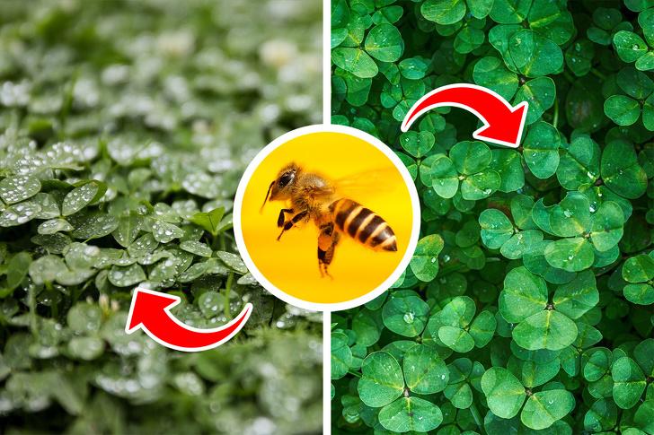 Tại sao loài ong rất quan trọng và chúng ta cần làm gì để ngăn chúng biến mất? - ảnh 2