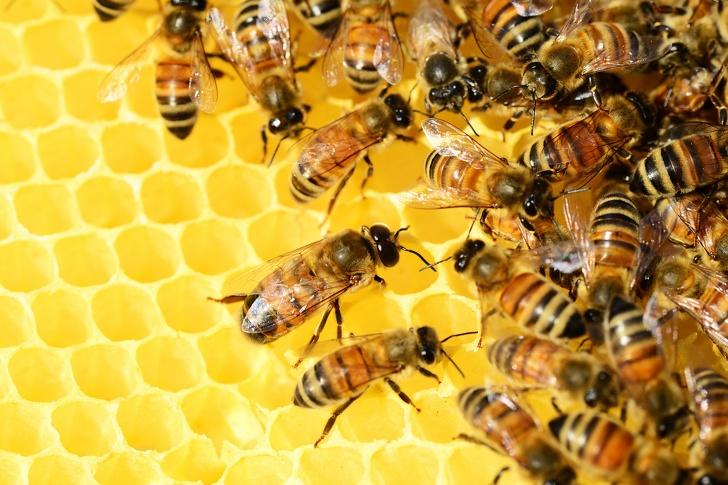 Tại sao loài ong rất quan trọng và chúng ta cần làm gì để ngăn chúng biến mất? - ảnh 5