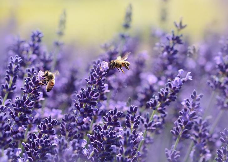 Tại sao loài ong rất quan trọng và chúng ta cần làm gì để ngăn chúng biến mất? - ảnh 6