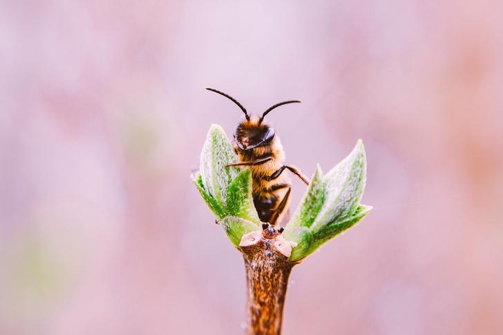 Tại sao loài ong rất quan trọng và chúng ta cần làm gì để ngăn chúng biến mất? - ảnh 7