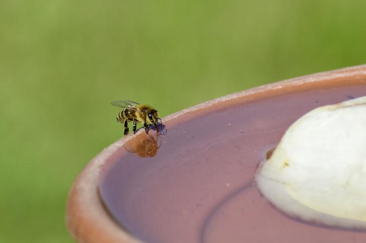 Tại sao loài ong rất quan trọng và chúng ta cần làm gì để ngăn chúng biến mất? - ảnh 9