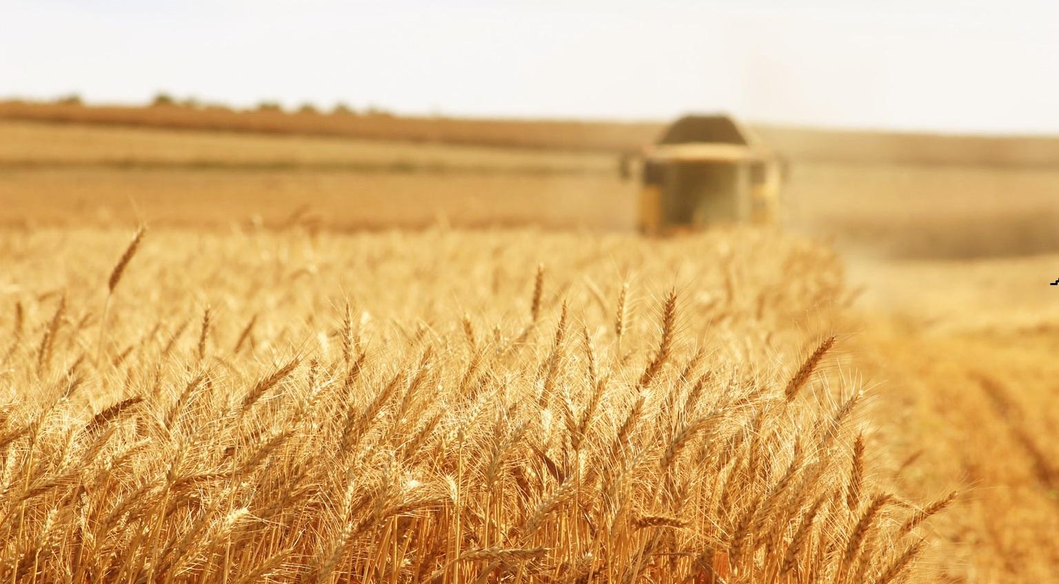 Thương anh nông dân bị ung thư giai đoạn 4, cả làng đưa máy kéo đến giúp thu hoạch lúa mì