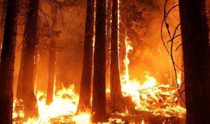 Không chỉ Amazon, các khu rừng trên khắp thế giới đều đang bốc cháy