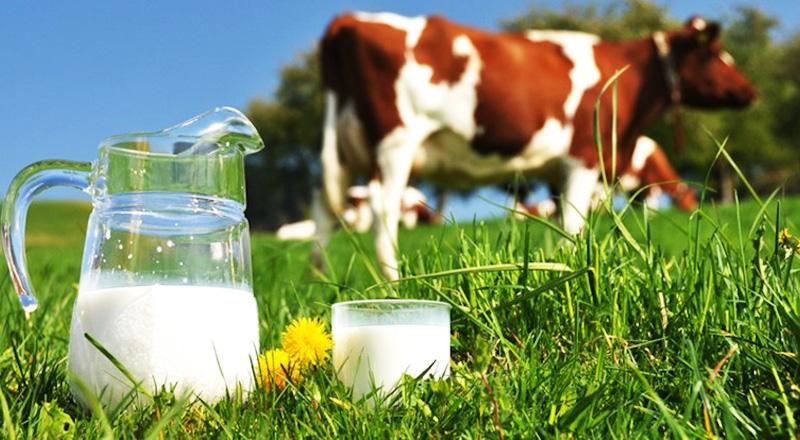 Sữa không chỉ là thức uống quen thuộc, nó còn là một biểu trưng văn hóa lâu đời có từ hàng ngàn năm nay của nhiều quốc gia trên thế giới. (Ảnh qua beykozorganik)