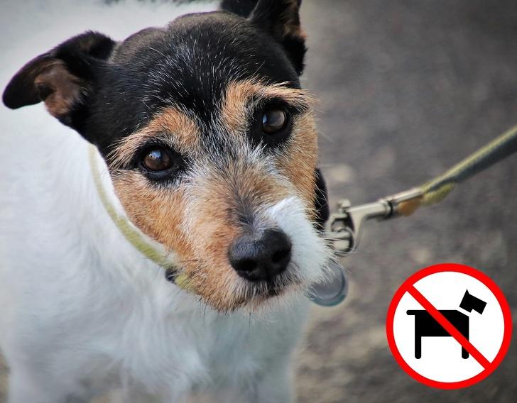 Không mang theo vật nuôi khi đến Singapore