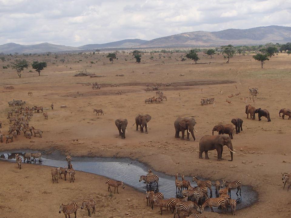 Các động vật, bao gồm voi, ngựa vằn và linh dương lâu dần cũng trở nên quen thuộc về sự xuất hiện của anh