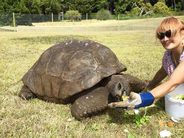 Cụ rùa thường được cho ăn cà rốt, rau diếp, dưa chuột, lê và táo…