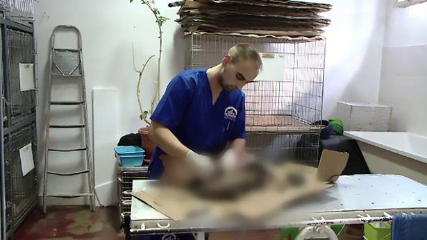 Bác sĩ thú y - Sorin Puiu là người trực tiếp cấp cứu cho những chú chó này.